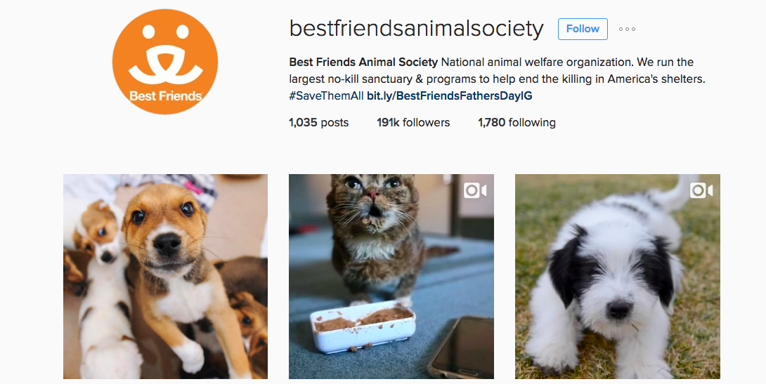 Instagram accounts-with- a-cause to inspire you