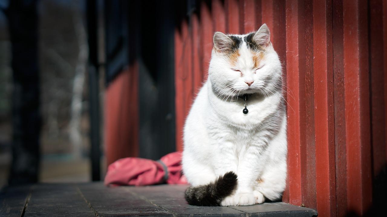 cat meditate