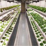 Could The Future of Farming Be Indoors?